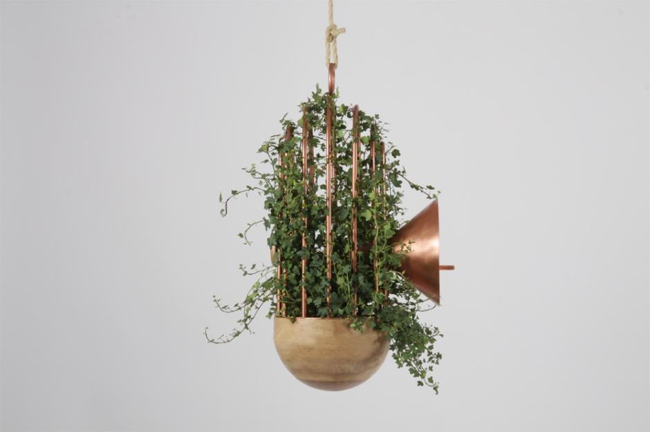 Orator-birds-nest-feeder-6