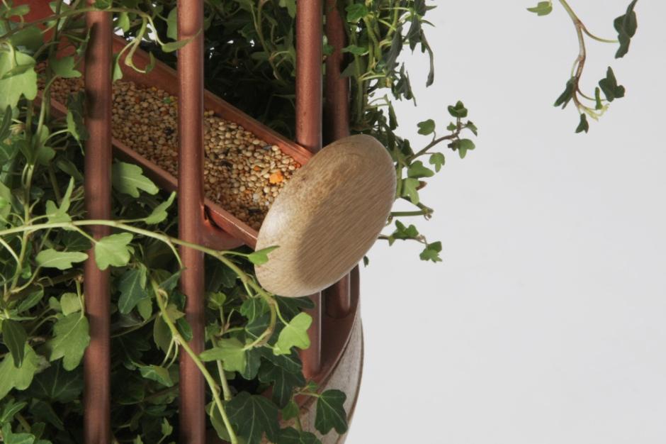 Orator-birds-nest-feeder-7